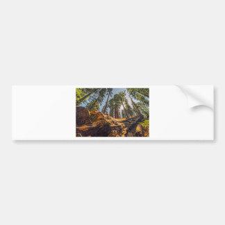 The Fallen Redwood Bumper Stickers
