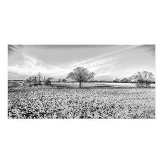 The Farm Tree Photo Cards