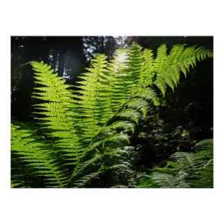 The Fern Poster