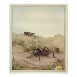 THE FIELD CRICKET - Insect Book Illustration Poster