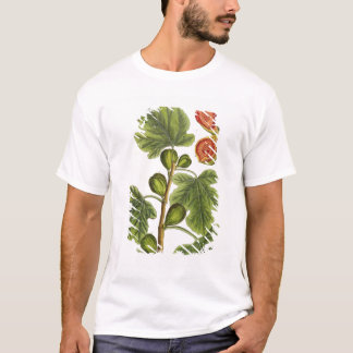 The Fig Tree, plate 125 from 'A Curious Herbal', p T-Shirt