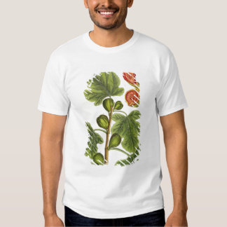 The Fig Tree, plate 125 from 'A Curious Herbal', p Tee Shirts