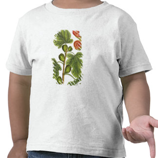 The Fig Tree plate 125 from A Curious Herbal p T Shirts