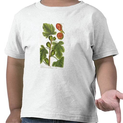 The Fig Tree, plate 125 from 'A Curious Herbal', p Tshirt