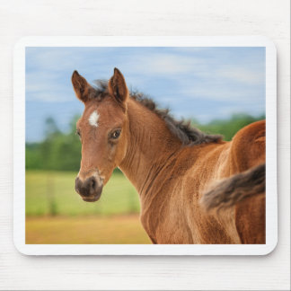 The Filly Mouse Pad