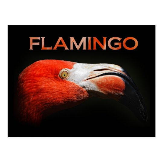 The Flamingo - head detail Postcard