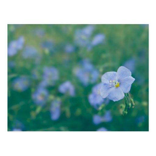 The Flax Fairy Postcards