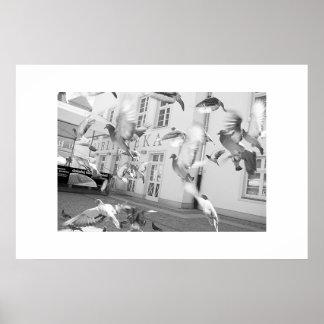 The Flock - Framed Print