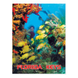 The Florida Reef in the Florida Keys Post Card