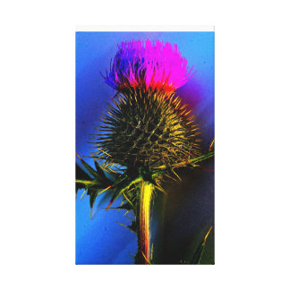 The flower of Scotland. Canvas Print