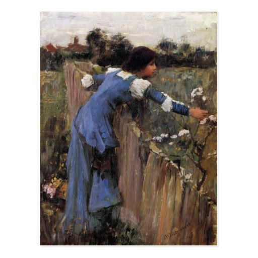 The Flower Picker Post Card