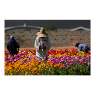 The Flower Pickers Poster