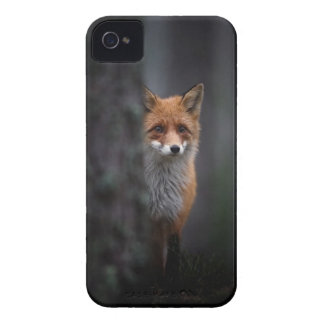 The fox iPhone 4 cases