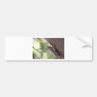 The Friendly Lizard Bumper Sticker