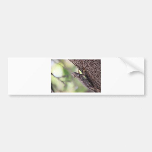 The Friendly Lizard Bumper Stickers