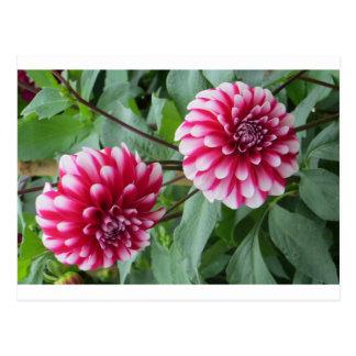 The Garden Flowers of Monet Postcard