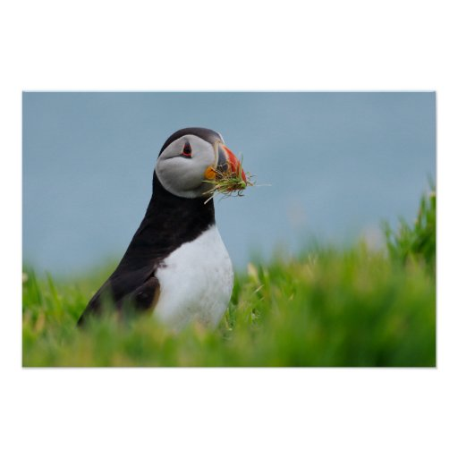 The Gatherer Puffin Posters