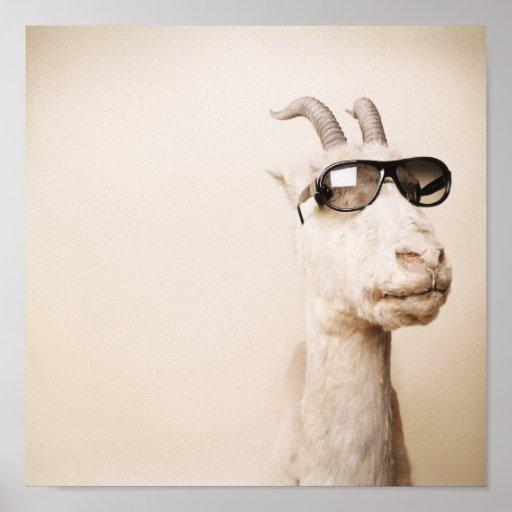 The goat print