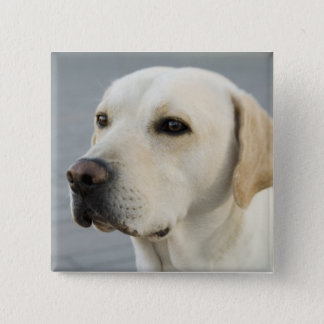 The Golden Labrador 15 Cm Square Badge