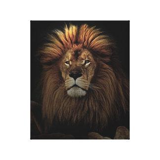 The Golden Proud  Lion Africa Canvas Print