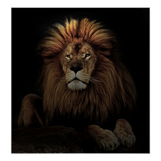The Golden Proud  Lion Africa Poster