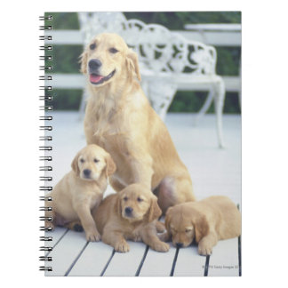 The Golden Retriever is a relatively modern and Note Books
