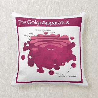The Golgi apparatus Golgi complex Diagram Cushions