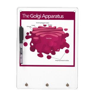 The Golgi apparatus Golgi complex Diagram Dry Erase White Board