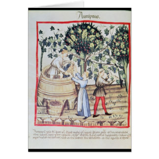 The Grape Harvest, 13th century Card