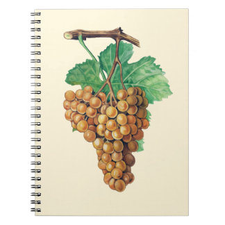 "The grapes ""terret blanc"", color : buttercream spiral note book"