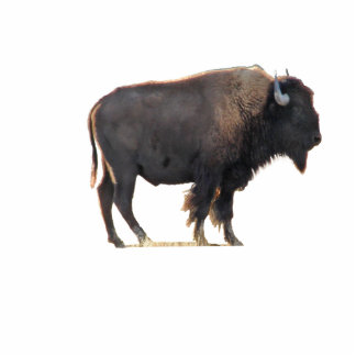 The Great American Bison Standing Photo Sculpture