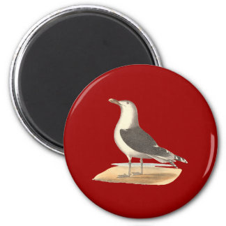 The Great Black-backed Gull(Larus marinus) Magnet
