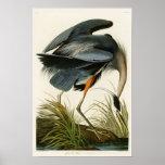The Great Blue Heron John Audubon Birds of America Poster