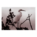 The Great Egret, Florida Keys Posters