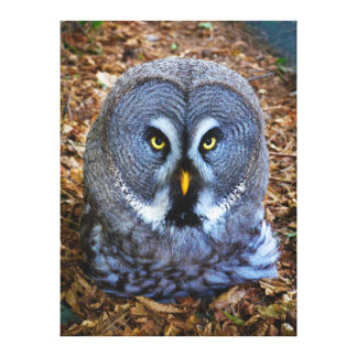 The Great Grey Owl Strix Nebulosa Lapland Owl Gallery Wrap Canvas