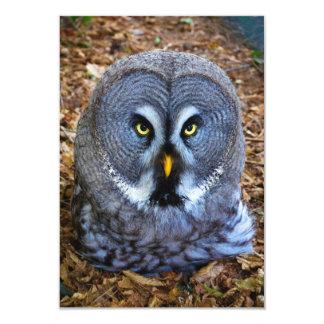 "The Great Grey Owl Strix Nebulosa Lapland Owl 3.5"" X 5"" Invitation Card"