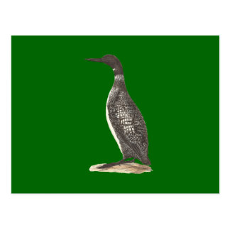 The Great Loon(Colymbus glacialis) Post Card