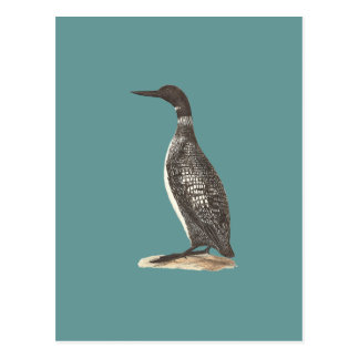 The Great Loon(Colymbus glacialis) Postcards