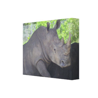 THE GREAT RHINO GALLERY WRAPPED CANVAS