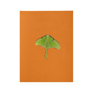 The green butterfly moth wood poster