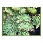 The Green Flower Plant Post Card