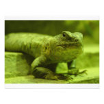 The Green Lizard Personalized Invitation