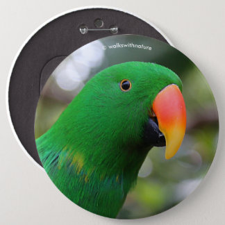 """""""The Green Orator"""" Eclectus Parrot 6 Cm Round Badge"""