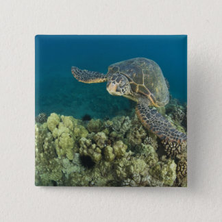 The Green Sea Turtle, (Chelonia mydas), is the 2 15 Cm Square Badge