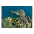 The Green Sea Turtle, (Chelonia mydas), is the 2 Card