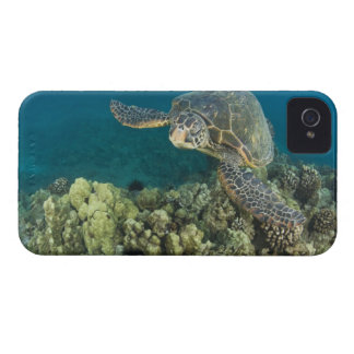 The Green Sea Turtle, (Chelonia mydas), is the 2 Case-Mate iPhone 4 Cases