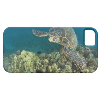 The Green Sea Turtle, (Chelonia mydas), is the 2 iPhone 5 Cases