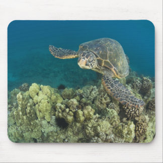 The Green Sea Turtle, (Chelonia mydas), is the 2 Mouse Pad