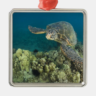 The Green Sea Turtle, (Chelonia mydas), is the 2 Silver-Colored Square Decoration