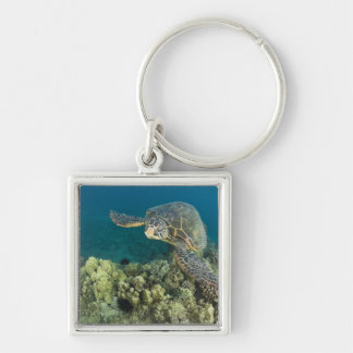 The Green Sea Turtle, (Chelonia mydas), is the 2 Silver-Colored Square Key Ring